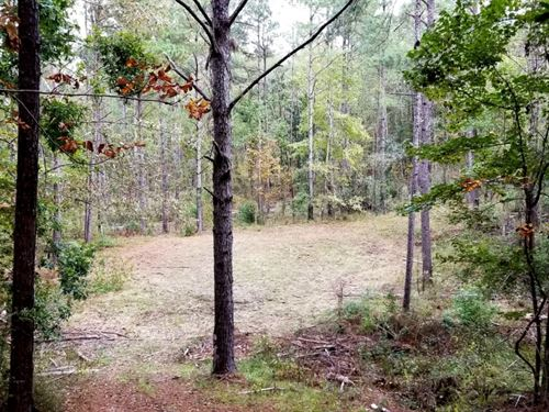 50 Acres Hunting And Timberland Pro : Woodville : Wilkinson County : Mississippi