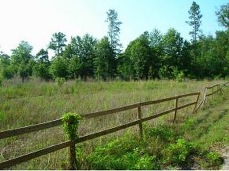 215 Acres (a 304) : Monteocha : Alachua County : Florida