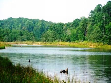 20 Acres Bordering Lake Russell : Abbeville : South Carolina