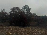 Jackson Co, Fl 13.8670 Acres $28K : Alford : Jackson County : Florida