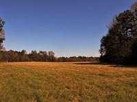 Oliver Creek : Greensboro : Greene County : Georgia