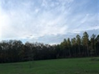 26+/- Acres Near Lagrange : Five Points : Chambers County : Alabama