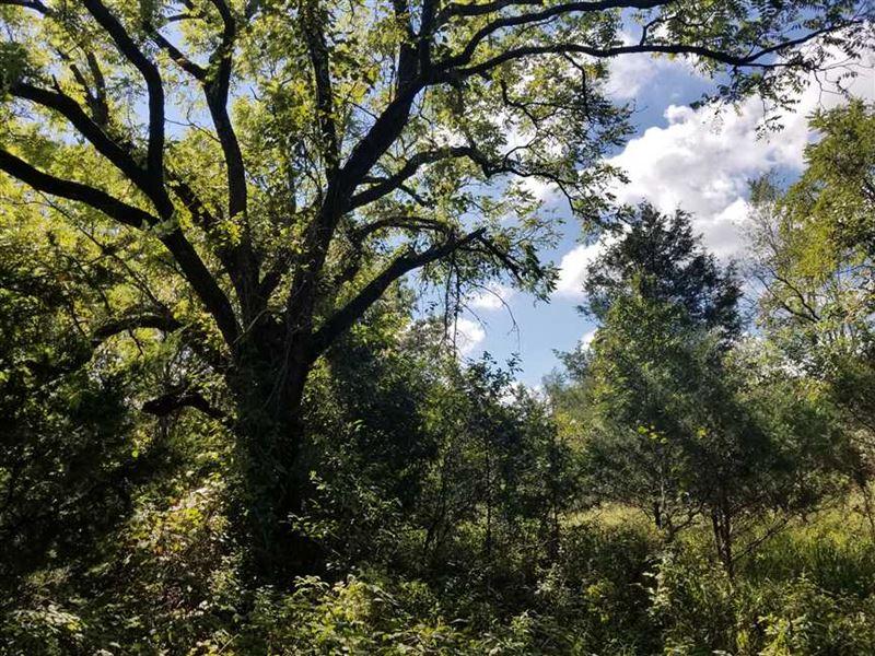 200 Acres of Ozark Mountain Timber : Squires : Douglas County : Missouri