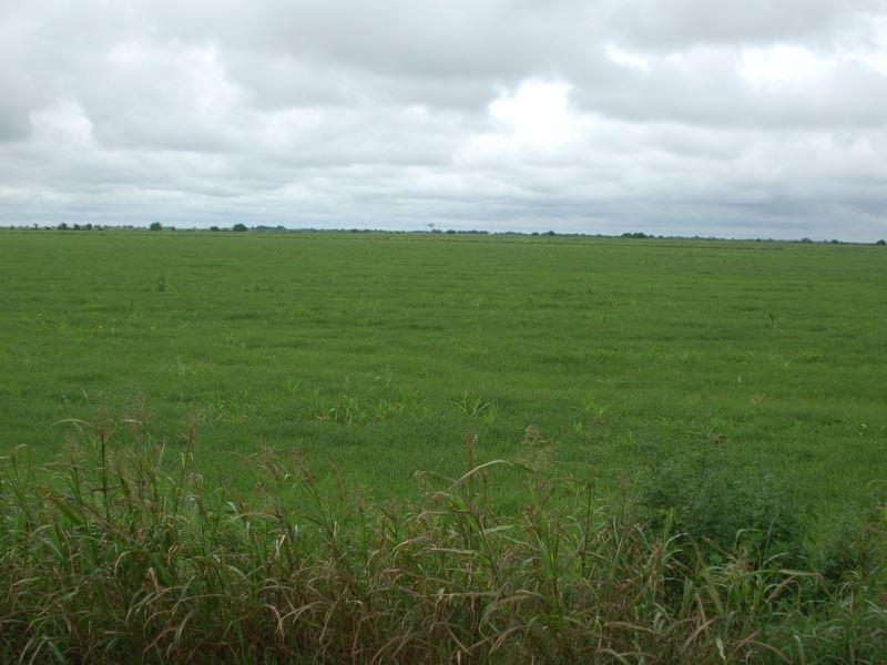 Garwood Farm : Garwood : Colorado County : Texas