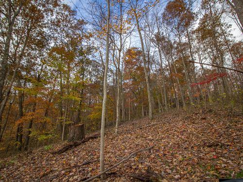 Clipner Rd, 40 Acres : Londonderry : Vinton County : Ohio