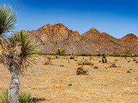 Homesite At Base Of Mountains : Deming : Luna County : New Mexico