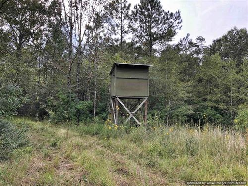 Beautiful Recreational Tract : Poplarville : Pearl River County : Mississippi