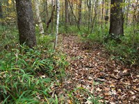 Cheap Land, Access, Utilities : Sylacauga : Talladega County : Alabama
