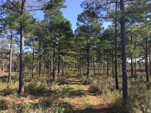 563 Acres With 50 Acre Pond : Arlington : Baker County : Georgia