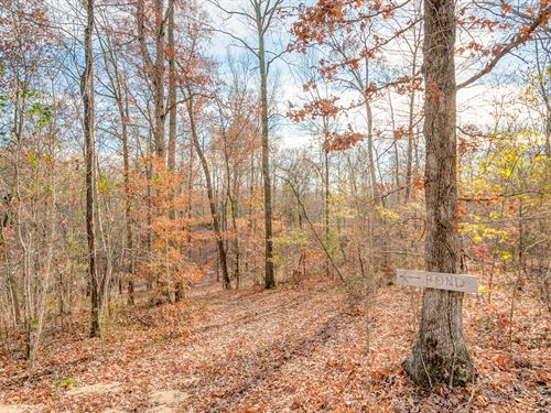 Gorgeous Hunting Tract : Lyles : Hickman County : Tennessee