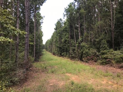 248 Acre Hunting And Timberland Pro : Summit : Pike County : Mississippi