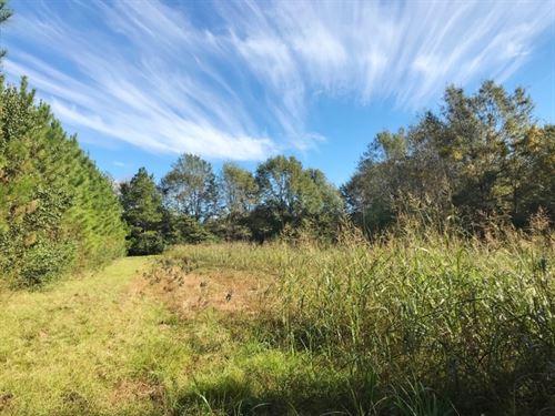 215 Acres Farm & Timberland : Lumberton : Lamar County : Mississippi