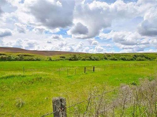 Spokane, Acreage, Creek Frontage : Latah : Spokane County : Washington