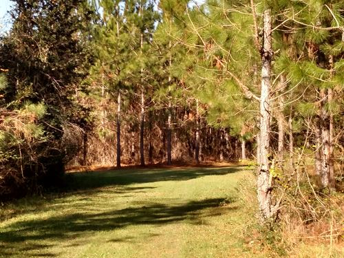 Beautiful 125 Ac With Timber/Pond : Moultrie : Colquitt County : Georgia