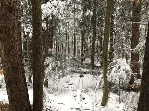 Near Ferris Lake Wild Forest : Salisbury Center : Herkimer County : New York