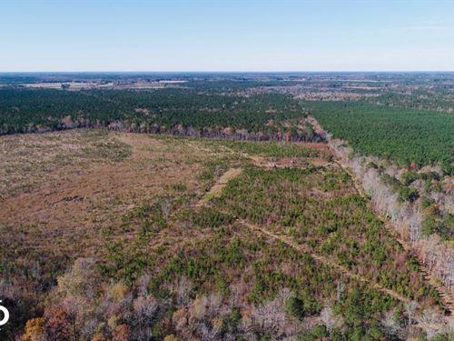 Jackson Hunting Tract : Jackson : Northampton County : North Carolina
