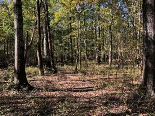 396.7 Acres In Sharkey County In Ro : Rolling Fork : Sharkey County : Mississippi