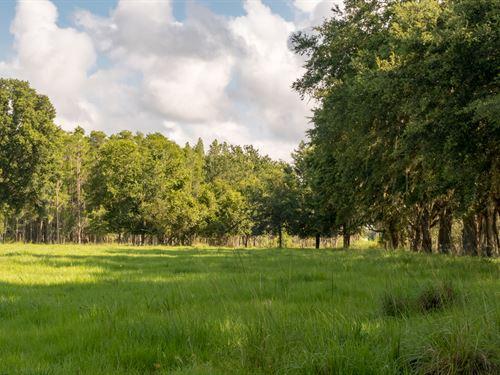 115 Acs Of Breathtaking Land : Lakeland : Polk County : Florida