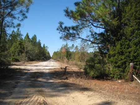 Recreational/timberland : Middleburg : Clay County : Florida