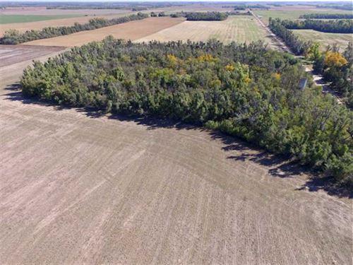 160 Acres of Hunting And Tillab : Saint John : Stafford County : Kansas
