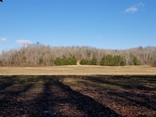 7.49 Acres, Creek, Available : Linden : Perry County : Tennessee