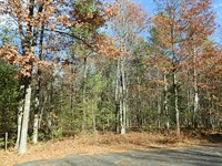 28 Ac Near Pike Lake Chain Area : Fifield : Price County : Wisconsin