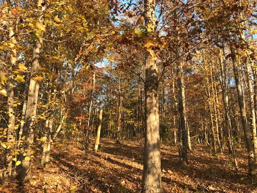 82 Acre Hunting Investment Land : Odenville : Saint Clair County : Alabama