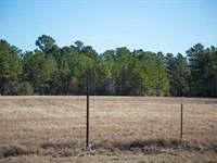 12 Ac N Fm 3179 : Huntsville : Walker County : Texas