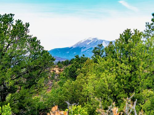 Wooded Mountain Top Homesite : Trinidad : Las Animas County : Colorado