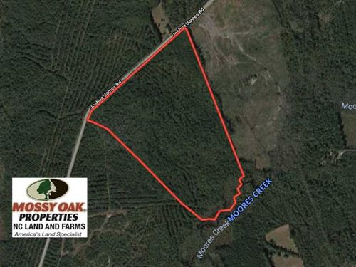 53 Acres of Hunting And Timber Lan : Maple Hill : Pender County : North Carolina
