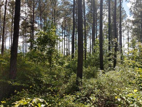 Harnett County Land : Cameron : Harnett County : North Carolina