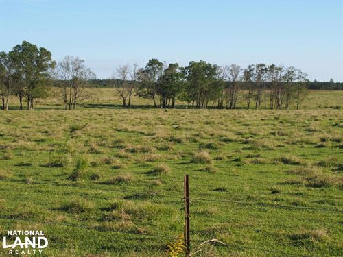 Walnut Hill Cattle Farm And Agricul : Walnut Hill : Escambia County : Florida