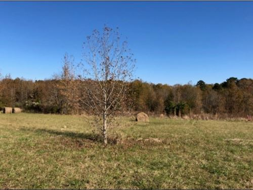 40 Acres In Neshoba County In Phila : Philadelphia : Neshoba County : Mississippi