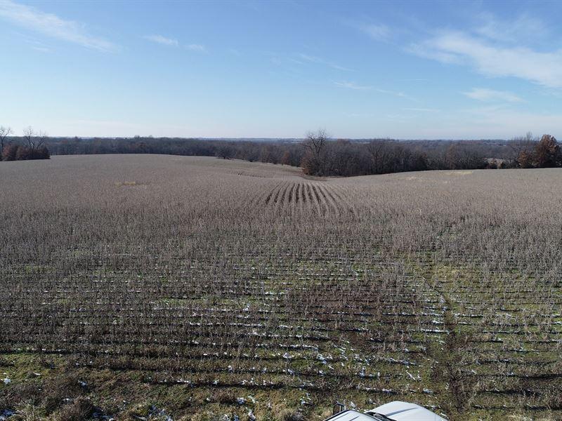 Online Only Auction Tillable Farm : Linneus : Linn County : Missouri