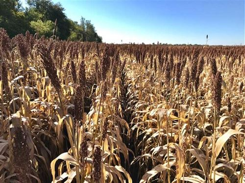 160 Acres of Tillable And Hunti : Saint John : Stafford County : Kansas