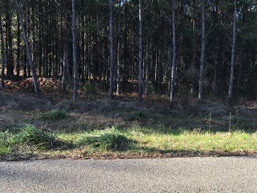 Hunting Land Houston County Alabama : Gordon : Houston County : Alabama