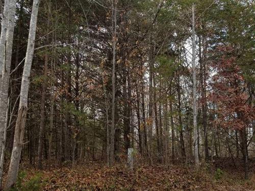 Nice Hunting Spot : Meherrin : Lunenburg County : Virginia