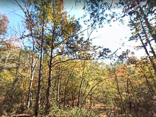 Union County, Fl $1.5 Million : Lake Butler : Union County : Florida