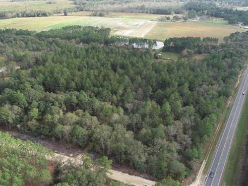 20 Acres Land For Sale Pierce Coun : Bristol : Pierce County : Georgia
