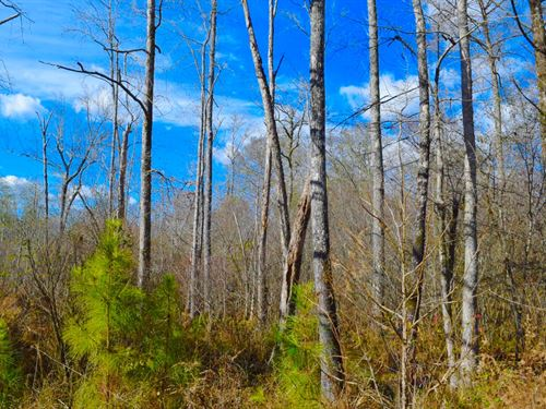 Duck Hunting Southwest Arkansas : Chidester : Ouachita County : Arkansas