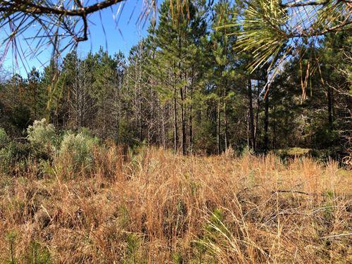 33.803 Acres, Hunting, Recreation : Karnack : Harrison County : Texas