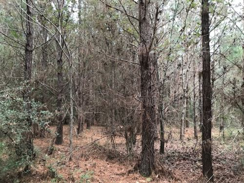 70 Acres 10 Year Old Pine Plantatio : Tylertown : Walthall County : Mississippi
