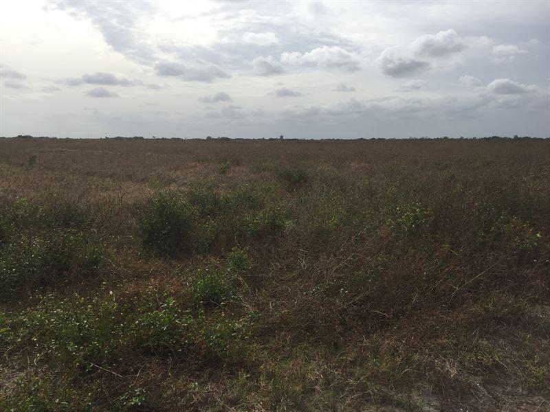 450 Irrigated Farm Acres : Okeechobee : Okeechobee County : Florida