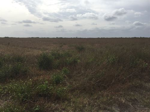 450 Irrigated Farm Acres : Okeechobee : Florida