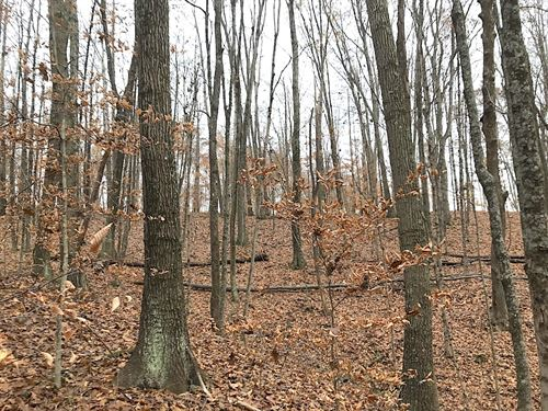 Scenic Rd, 71 Acres : Corning : Perry County : Ohio