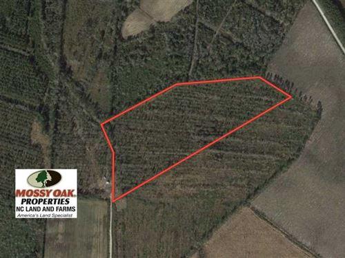 20 Acres of Hunting And Timber Lan : Tabor City : Columbus County : North Carolina
