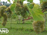 Vineyard, Retail Winery & Event Spa : Rochester : Olmsted County : Minnesota
