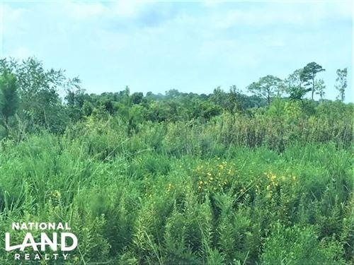 Hyde 54 Acres : Scranton : Hyde County : North Carolina