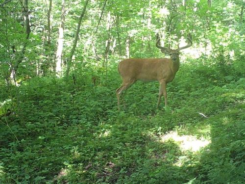Ocooch Mountains Deer Hunting Camp : La Farge : Vernon County : Wisconsin
