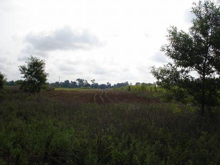 Pence Lake Tract B : Bennettsville : Marlboro County : South Carolina